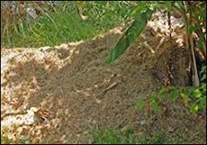 07-Plaplaceholder-Garden-Compost